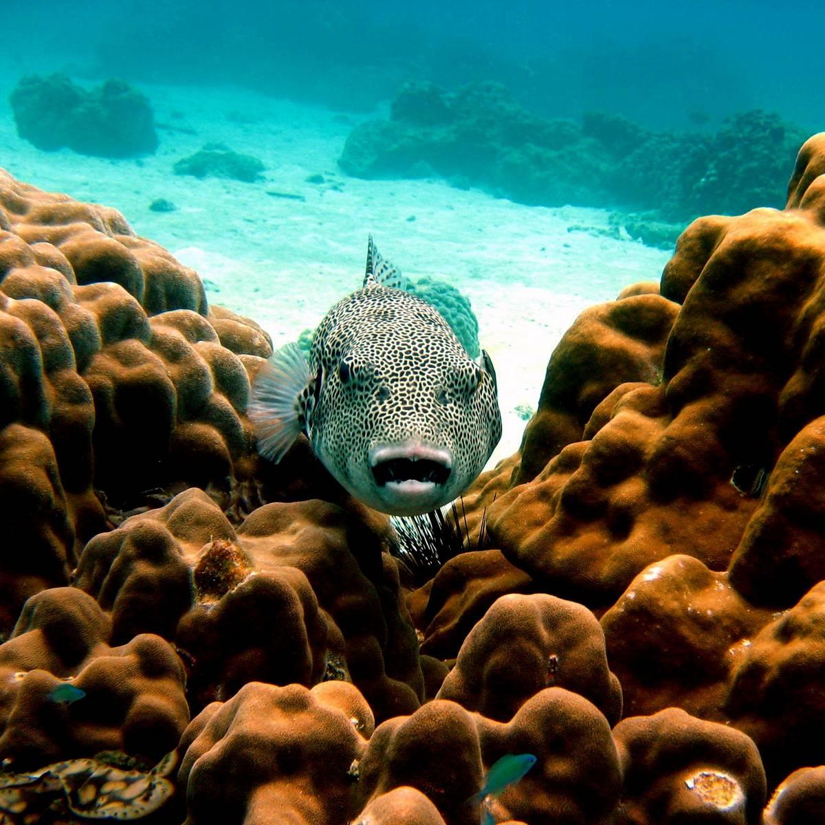 Daytrips to Racha Yai and Racha Noi islands by Namloo Divers Phuket