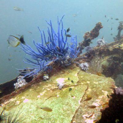 King Cruiser Wreck Diving by Namloo Divers in Phuket